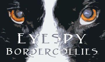 EyeSpy Border Collies Logo